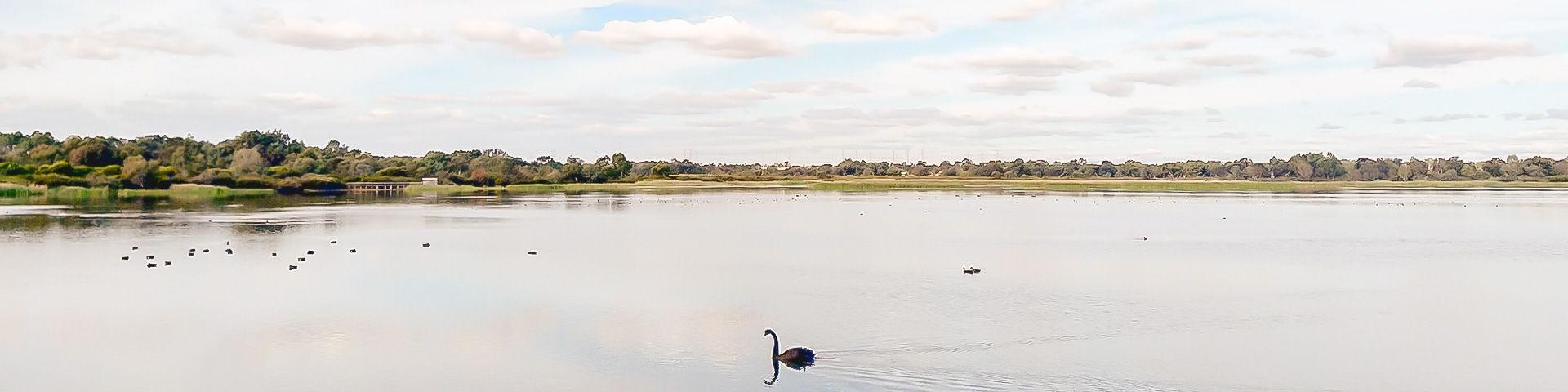 Bibra-lake-panorama